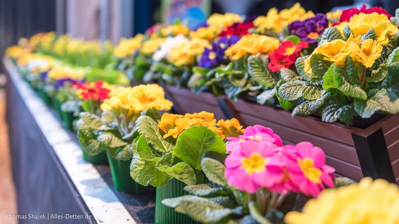 32. Emsdettener Frühjahrsmarkt